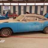 Superbird Freed by Chain Saw